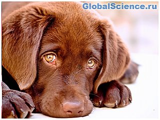 Собака – «испорченный тренд буржуазной идеологии»