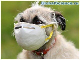 Собаки – лучшие эксперты по COVID-19