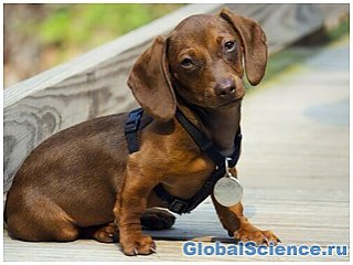 Собаки – самые большие ревнивцы среди животных