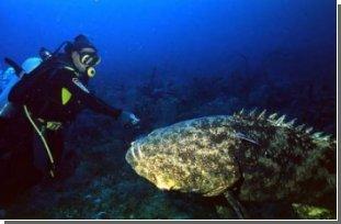 Генетики виявили невідомий різновид величезної риби
