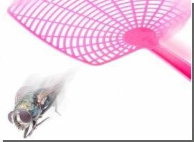 Ученые выяснили, почему муху так трудно прихлопнуть