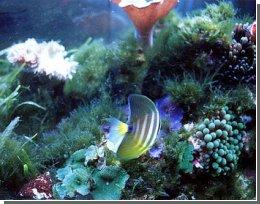 П'ята частина коралів вже мертва, кажуть експерти