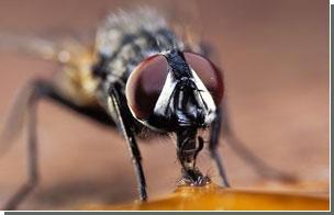 "Создана ""не пахнущая"" ловушка для мух"