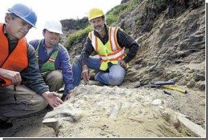 На пляже графства Санта-Круз найдены останки древнего зубатого кита