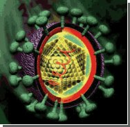 Найдена вакцина от гепатита С?