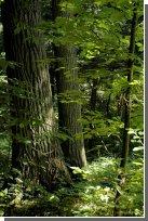 Жизнь и смерть растений зависит от их размеров