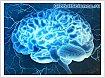 Ученые нашли способ омолодить мозг